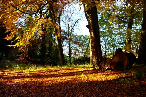 20121111-11_Autumn Colours - Lidcombe Wood - Cotswolds by gary.hadden