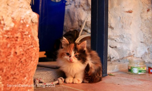 ...and they have a cute kitten!