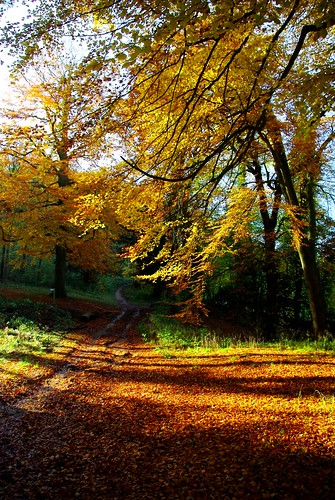 20121111-10_Autumn Colours - Lidcombe Wood - Cotswolds by gary.hadden