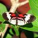 Butterfly World 2013