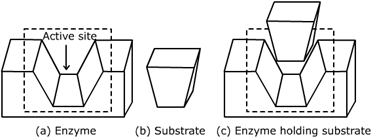 CBSE Class 12 Chemistry Notes: Chemistry in Everyday Life