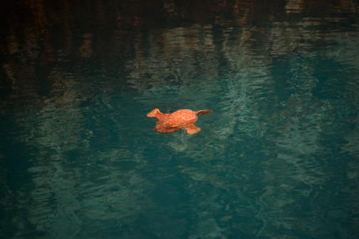 frogfish 2