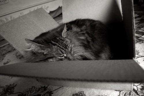 Cat in a Box 3