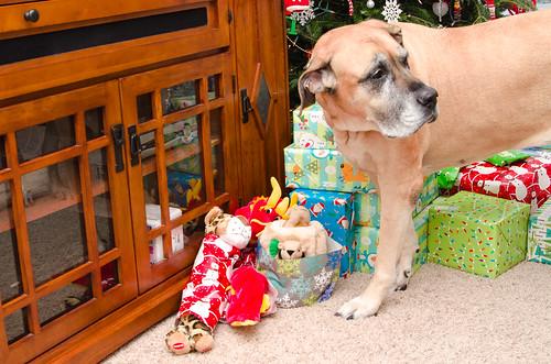 Sasha's Gifts