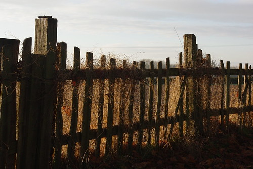 20121201-01_Rustic Fence_Cawston Rugby by gary.hadden