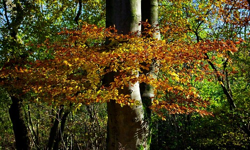 20121111-15_Autumn Colours - Cotswolds by gary.hadden