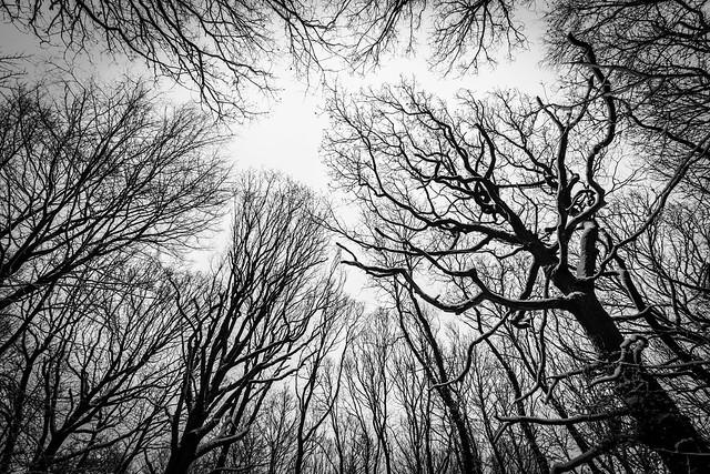 Burtonian Wood