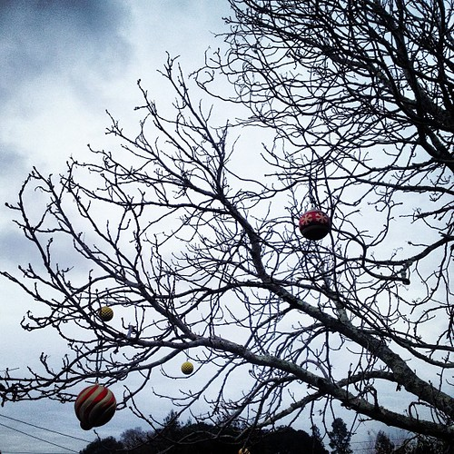 Amid baubles and bare boughs