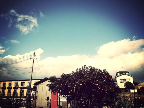 みかんと冬の空。