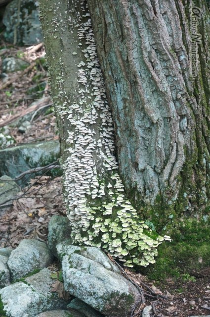 mushrooms 0006 Harriman park, NY, USA