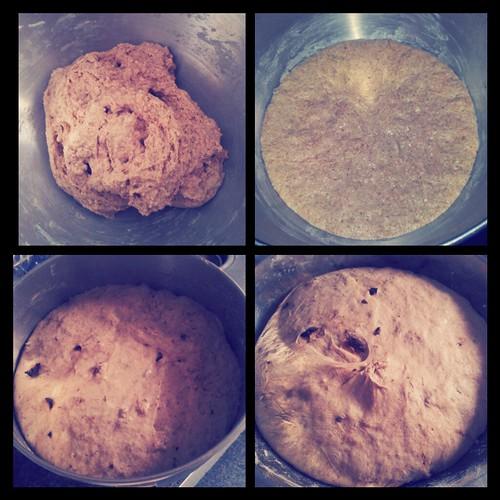 Olive Rosemary Bread Dough