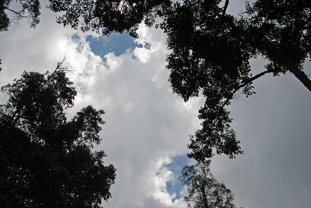 tree tops at Nyungwe National Park
