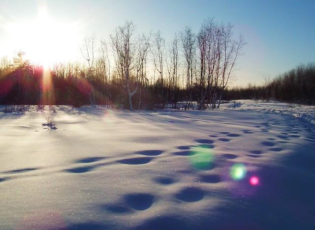 new fallen snow_Ottawa