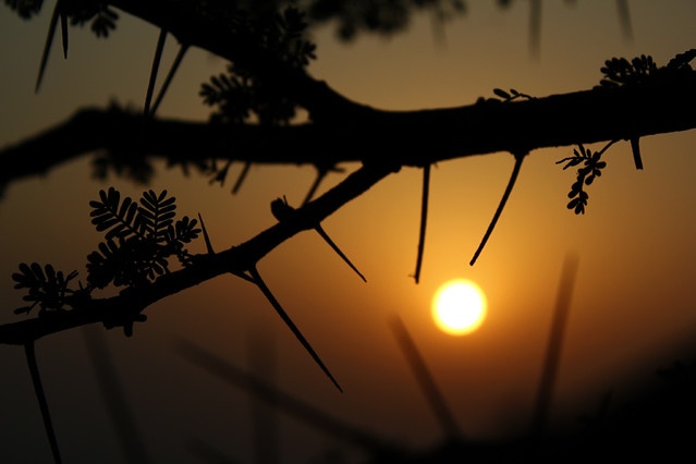 Sunset - Pushkar