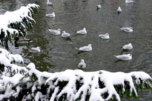 Parc Monceau sous la neige-052 by Mhln