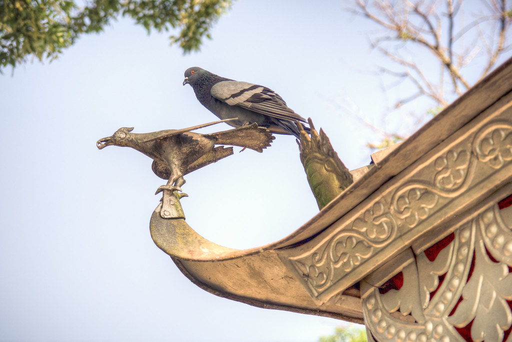 Aves en Barahi Temple,  things to do in pokhara