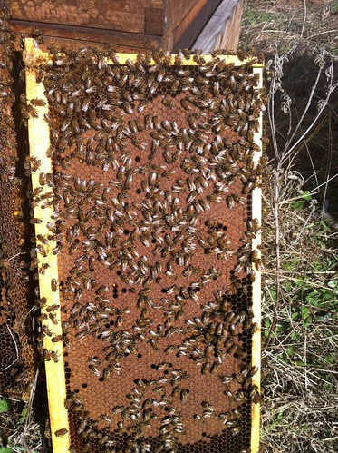 That's a lot of brood about to come out.