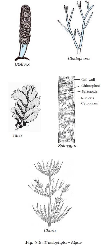 Diversity in living organisms class 9 pdf