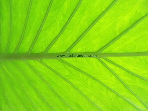 Tropical Textures (1)