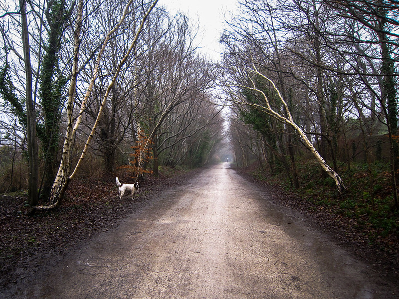 Max on the Castleman Trailway, Broadstone