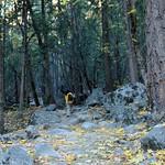 USA, PN Yosemite 15