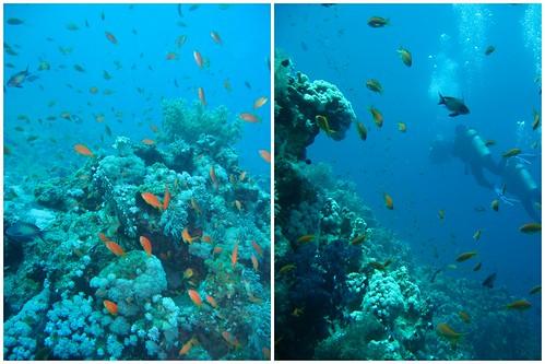 Ägypten unter Wasser 2012 2012-04-15