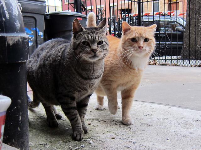 Horace & Mongo