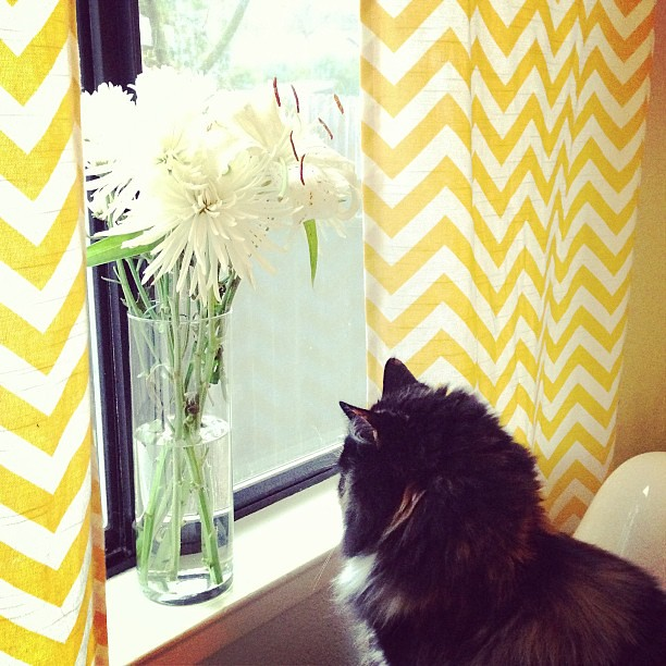 Bella looking out the window and admiring my flowers. #cat #catsofinstagram