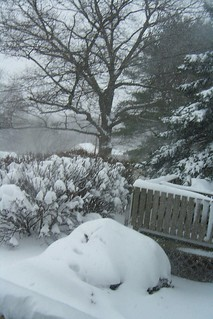 Blizzard 2013 Front Garden