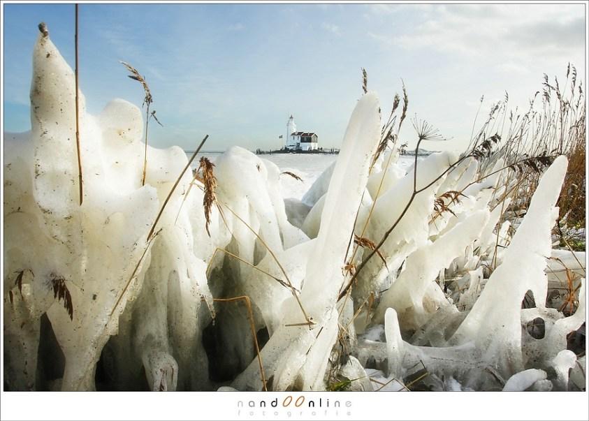 Het riet in ijs gepakt