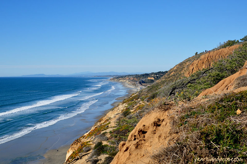 torrey_pines_beach_web