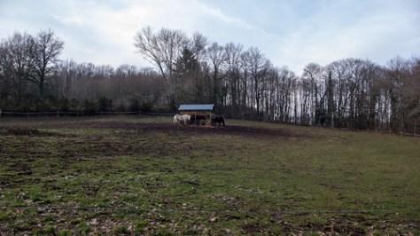 Horses of Le Cheval Rouge, Le Mas Saint Jean, France