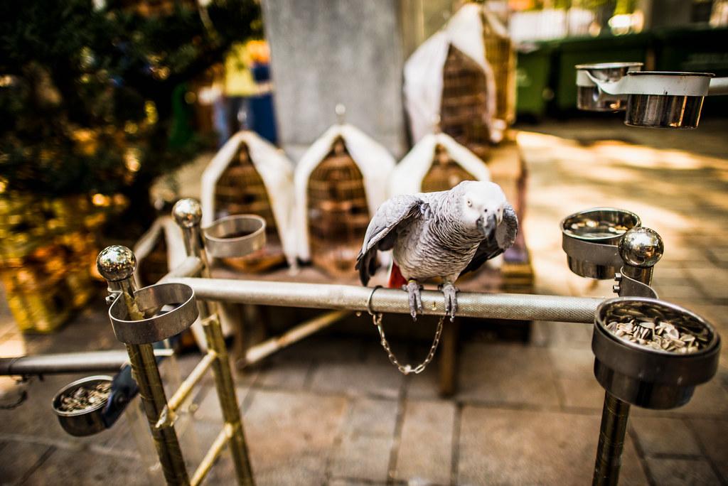 Yuen Po Street Bird Garden-11