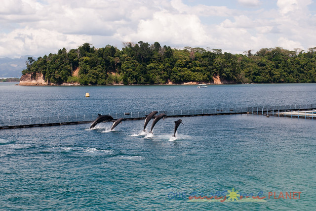 Dolphin and Whale Show-29.jpg