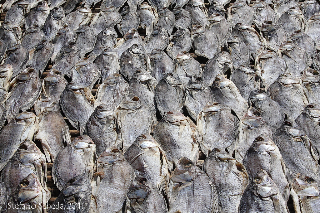 Dried fish - Uganda