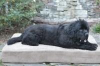 Pictures of Dogs on Big Barker Beds   Big Barker