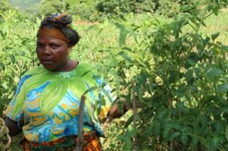 A local farming heroine in Tanzania's Babati district,Galapo Village - meet Monica Paschal