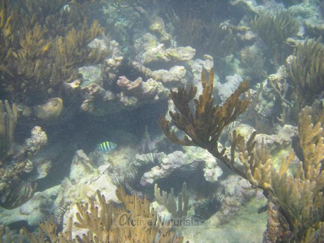 corals 0023 Tulum, Quintana Roo, Mexico