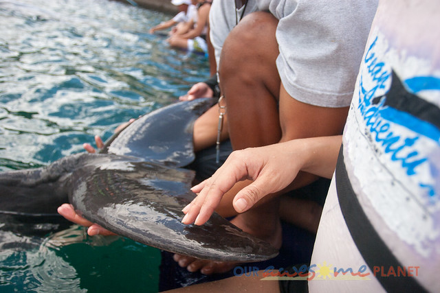 Swim Encounter with Dolphin-70.jpg