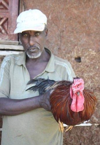 Smallholder poultry production