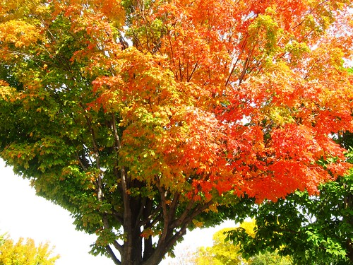 2012 Fall Colors in Nordeast Minneapolis