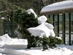 Snow-sculpted