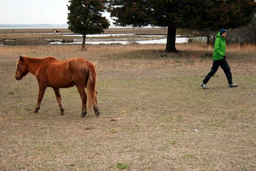 Assateague State Park - wild horses at our campsite