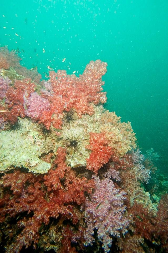 Phuket diving 2