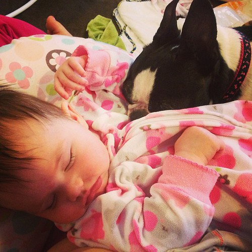 Evey sleeping in mamas lap with her furry sister