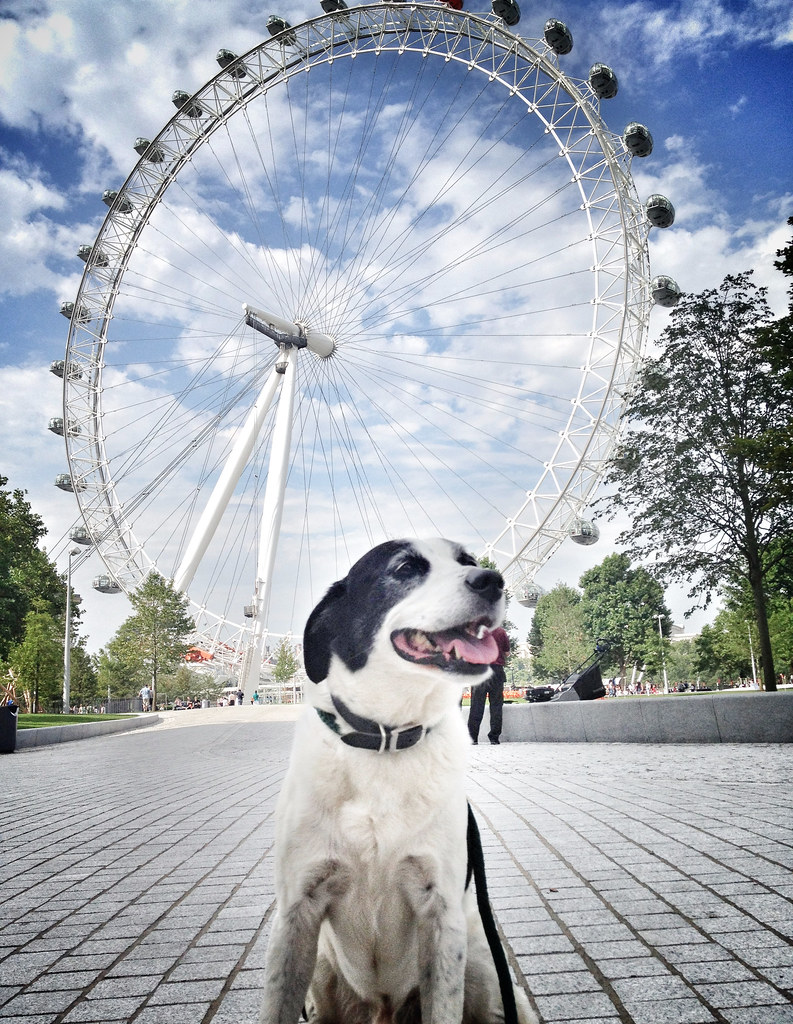Rocky at the London Eye (post-edit)