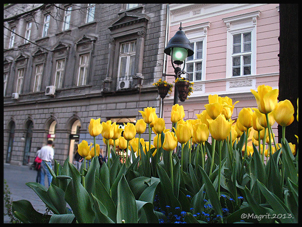 yellow in the city