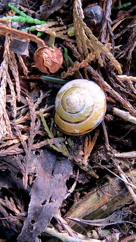 Weatherbeaten shell