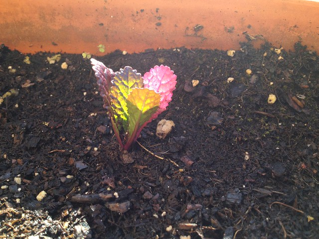 Spring has sprouted