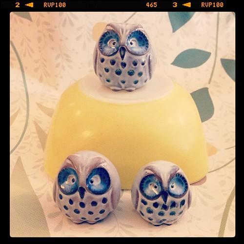 :: The Owl Family ::